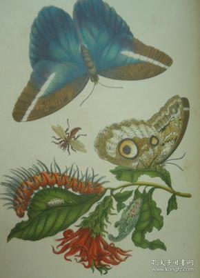 1860年《蝴蝶图册》24桢绝美套色雕版版画 彩画纸面精装