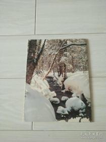 朝鲜画册,白头山密营