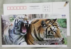 牡丹江东北虎园---优惠明信片门票-(较少)