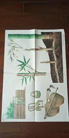 1964年出版印刷 彩色宣传画 2开 《竹 》 王锡昌 绘