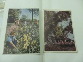 早期 2张 硬纸画片
