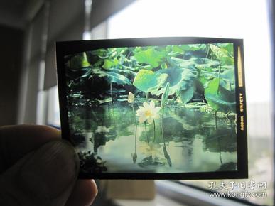 1982荷花,菊花,杜鹃花等摄影柯达彩色反转底片六种