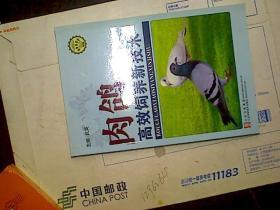 肉鸽高效饲养新技术