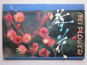 梅花明信片