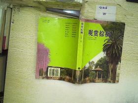 观赏棕榈      .