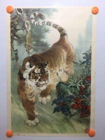 80年代名家绘画精美年画——虎