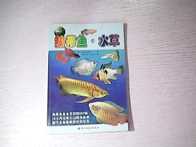 热带鱼水草