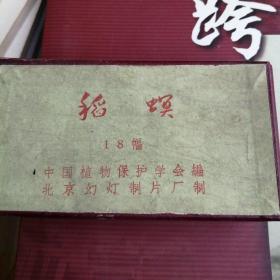 稻蟆幼灯片(18幅)