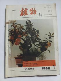 植物杂志1988年(第1-6期全年6期)