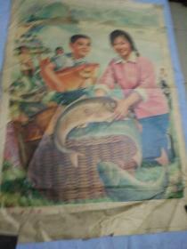 70年代宣传画,临朐文化馆供稿,农民侯纪德画,水库鱼肥年画。76/53