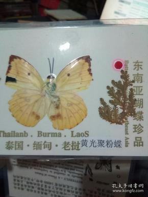 东南亚植物标本(共计9张)