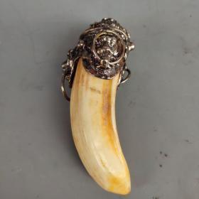 镶嵌藏银保真超大动物牙齿 尺寸如图,重54克
