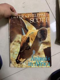animals in africa  非洲的动物  大16开!画册 1965年!