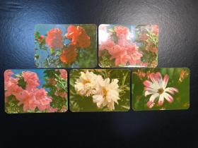 日历卡(1978)花朵【5张】