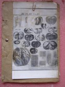 寒武纪化石 照片图版  8张  每张附文字说明   第一张照片没有文字说明