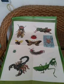 动物教学挂图13幅合售2开