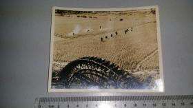 1960前后,老摄影家乐金林作品《水车稻田》