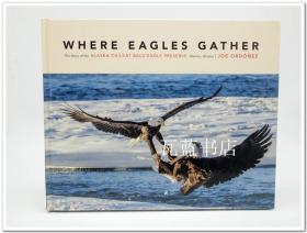 Joe Ordonez 野生动物摄影Where Eagles Gather