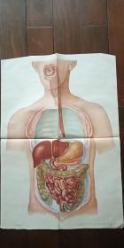1962年出版印刷 彩色宣传画 2开 《一个豆瓣的旅行》 贾镇廷 绘