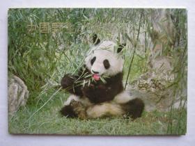 中国野生动物集锦1
