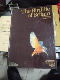 THE BIRDLIFE  OF BRITAIN
