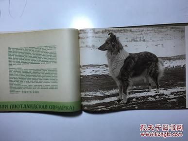 名犬图册 德文版