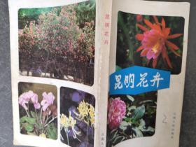 昆 明花卉