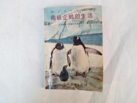 南极企鹅的生活