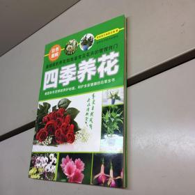 休闲生活系列:四季养花宝典