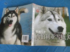 极地王子 西伯利亚雪橇犬