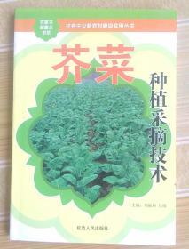 芥菜种植采摘技术