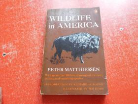 WILDLIFE IN AMERICA PETER MATTHIESSEN野生鸟类、动物----研究(英文原版)馆藏,详见图片