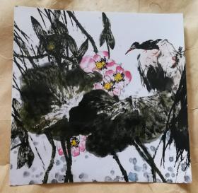 画家赵东平(夏荷图)画照片尺寸18.5公分×19公分