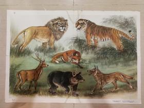 1960年国画宣传画《野兽图》