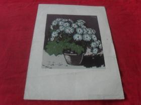 56年老画片---《瓜叶菊》8开 56年一版一印