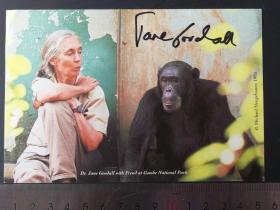 钁楀悕鍔ㄧ墿瀛﹀ 鐝嶅Ξ路鍙ら亾灏旓紙Jane Goodall锛変翰绗旂鍚嶅畼鏂瑰浼犵収
