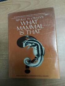 英文原版书:What mammal is that? 它是什么哺乳动物?