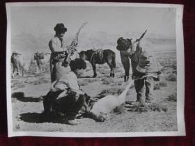 老照片   青海省乌兰县茶卡人民公社打猎队猎获的黄羊  麻面厚纸      照片20厘米宽15厘米    B箱——19号袋