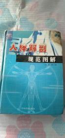 人体解剖规范图解 第2.3册 有水渍 两册合售