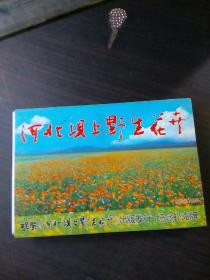 河北坝上野生花卉扑克牌