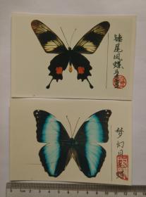 《蝴蝶标本照片》(7张)