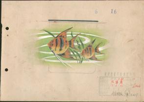 1973年10厘米搪瓷杯图案 手绘设计原稿《热带鱼》