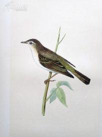 【45】1866年《欧洲鸟类图谱:博氏柳莺》(BONELLIS WARBLER)--25*15.5厘米--石版雕刻,手工上色