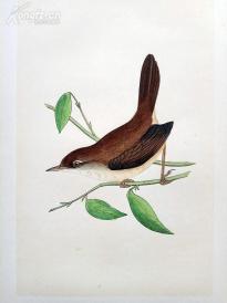 【93】1866年《欧洲鸟类图谱:宽尾树莺》(CETTIS WARBLER)--25*15.5厘米--石版雕刻,手工上色