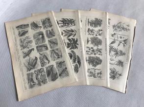 """19世纪德文书页""""室内外植物图样、益鸟害鸟图样、药用植物""""等4张双面"""