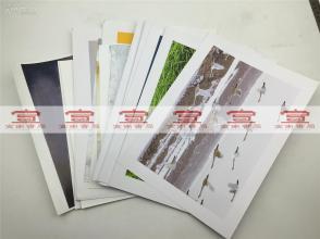大众摄影参展照片:袁广明等摄影照片《甘露降石林》等20张合拍(大尺幅 具体如图)【181224B 23】