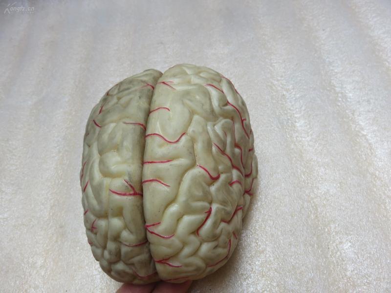 橡胶脑模形一个19040925