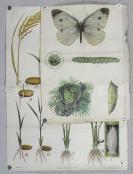 六七十年代 《农业基础知识教学挂图》一组四幅(尺寸:53*75cm*2,76*105cm*2) HXTX113053