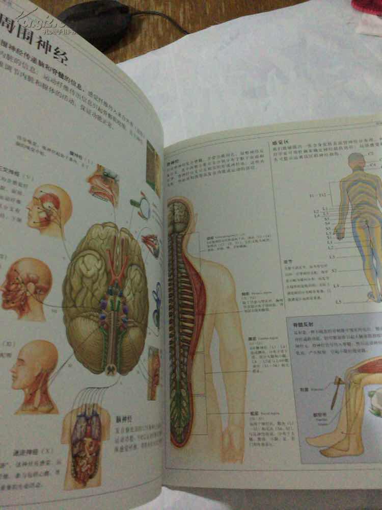 人体 人体结构,功能与疾病图解(大16开精装)