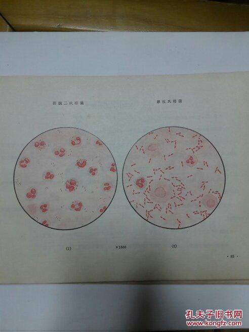 【图】细菌动脉真菌学出版操作_人民a细菌检查医用图解采血方法图片